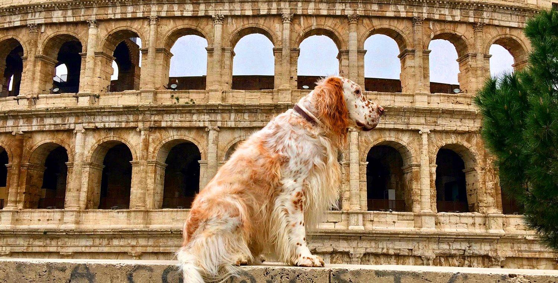 rome-tour-dog
