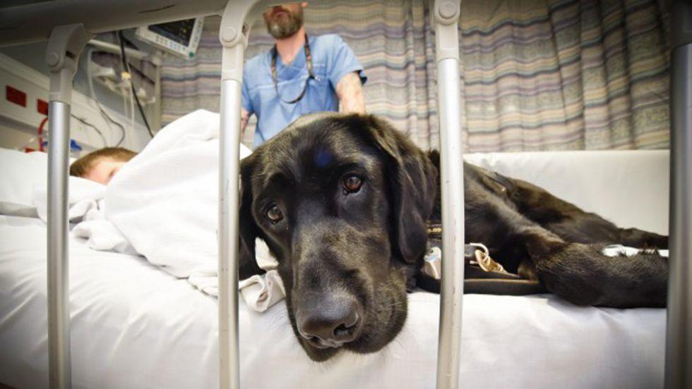 mahe, il labrador che si prende cura el suo piccolo umano