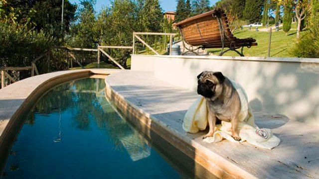 cane-ospite-al-Fonteverde-Natural-Spa-Resort-web