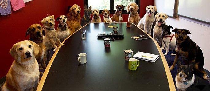 lavorare-cane-ufficio-migliora-l-efficienza
