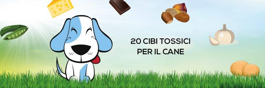 20 cibi più tossici per il cane
