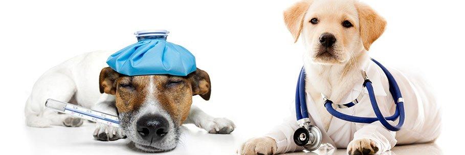 mutua sanitaria cani gatti