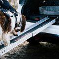 automobile a misura di cane