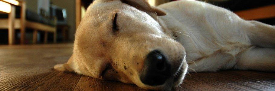 posizioni nel sonno dei cani