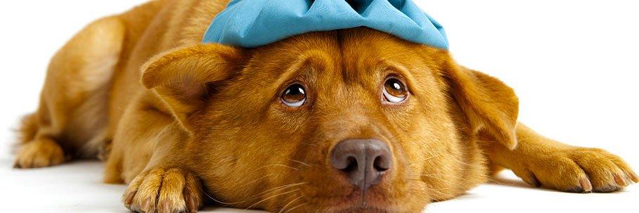 permesso-retribuito-curare-proprio-cane