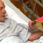 Cani, gatti e conigli in ospedale: Finalmente in Lombardia si può