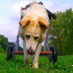 La storia del cane Figaro, da randagio a cocco di casa