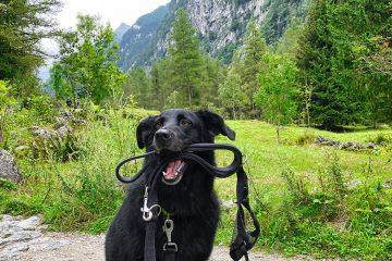 Dog-Trekking-di-branco-in-Val-di-Mello---Valtellina