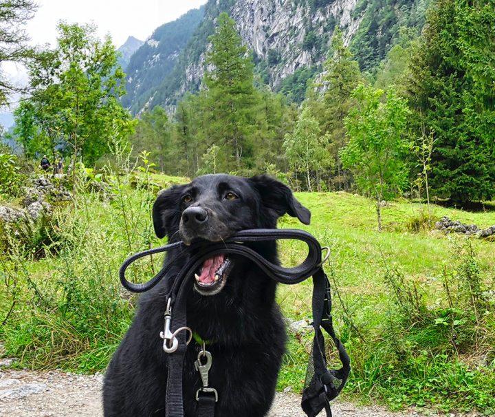 Dog-Trekking-di-branco-in-Val-di-Mello --- Valtellina