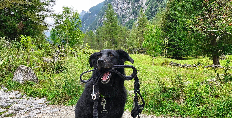 Hundetrekking-di-branco-in-Val-di-Mello --- Valtellina