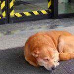 La storia di Leo, il cane che aspetta il suo umano fuori dall'ospedale