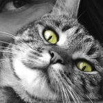 Cercasi coccolatori di gatti: un lavoro incredibile