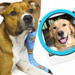 Personalizza i calzini con la foto del tuo cane