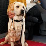 Cani gratis per luglio e agosto sui treni Italo
