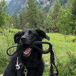 Vacanze con un cane in montagna: dog trekking in Lombardia Valtellina Val di Mello