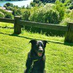 Gita con un cane al lago Segrino: dog trekking Lombardia