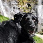 Vacanze con un cane in montagna: dog trekking in Lombardia Chiavenna Cascate Acquafraggia