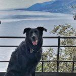 Itinerario dog trekking in Liguria: Camogli-Punta Chiappa