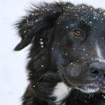 Come e perché proteggere i cani dal freddo
