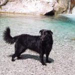 Itinerario trekking con un cane: Cascate della Val Vertova a Bergamo