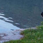 Itinerario trekking con un cane: Sentiero Azzurro Lago di Mergozzo