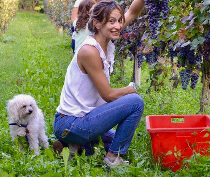 harvest-dogs-tour