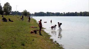sics-scuola-italiana-cani-da-salvataggio