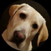 Asien-Reise-für-Hund