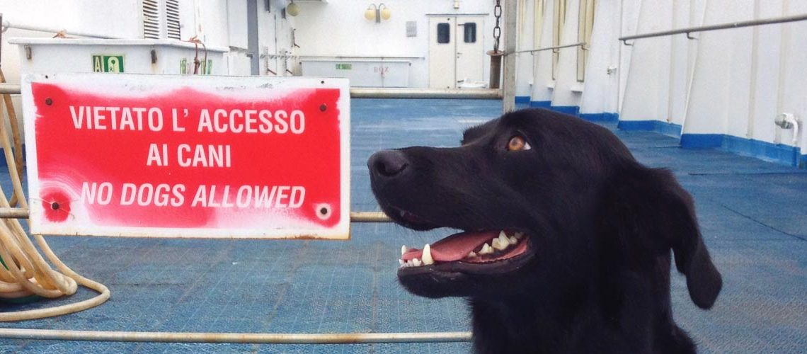 big-image_travel-with-a-dog-by-ship