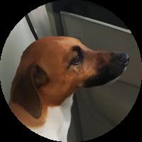 kira-ausflug-für-hund