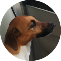 kira-trip-for-dog