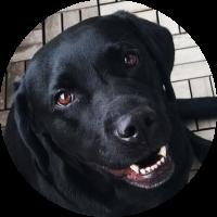 Margot-Reise-für-Hund