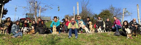 Missionsreise-für-Hund