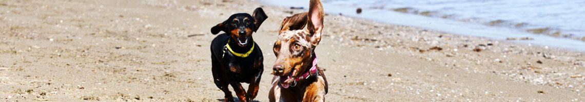 spiagge-cani-bau-dog-friendly