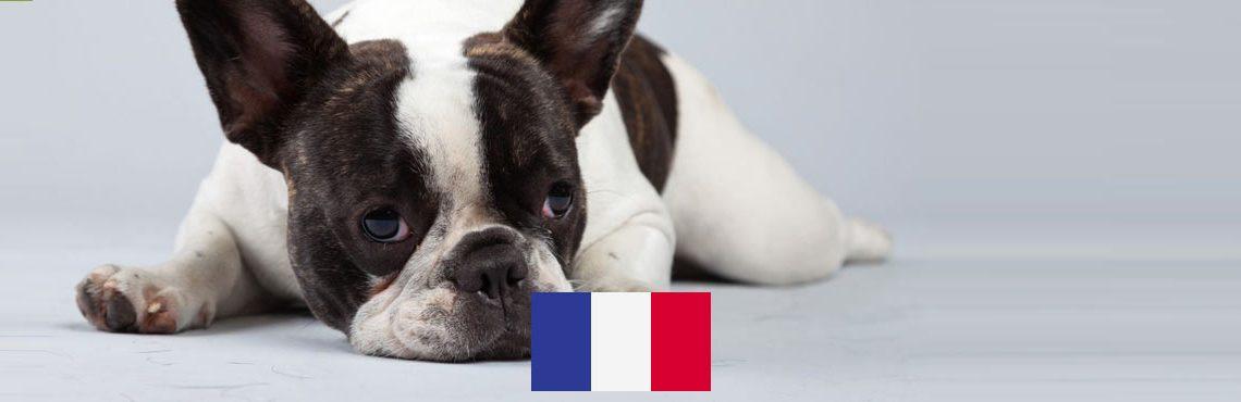 vacanze-cane-francia-header2
