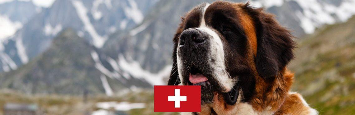 dog-holidays-switzerland-header2