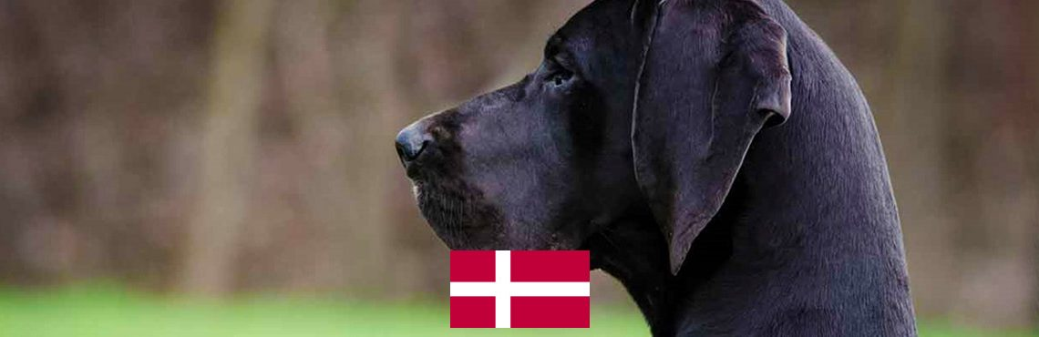 travel-dog-denmark2