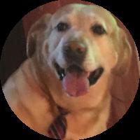 Yago-Reise-für-Hund