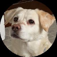 Juwel-Reise-für-Hund