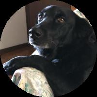 mela-pres-trip-for-dog
