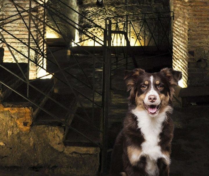 naples-underground-with-a-dog_v2
