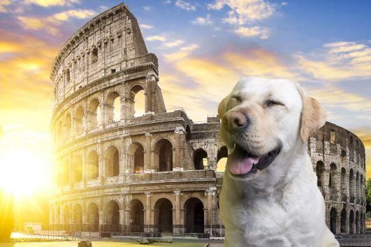 visita-colosseo-roma-con-un-cane_v2