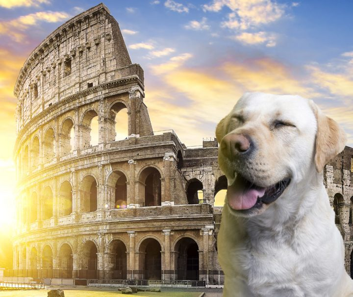 visit-colosseum-rome-with-a-dog_v2