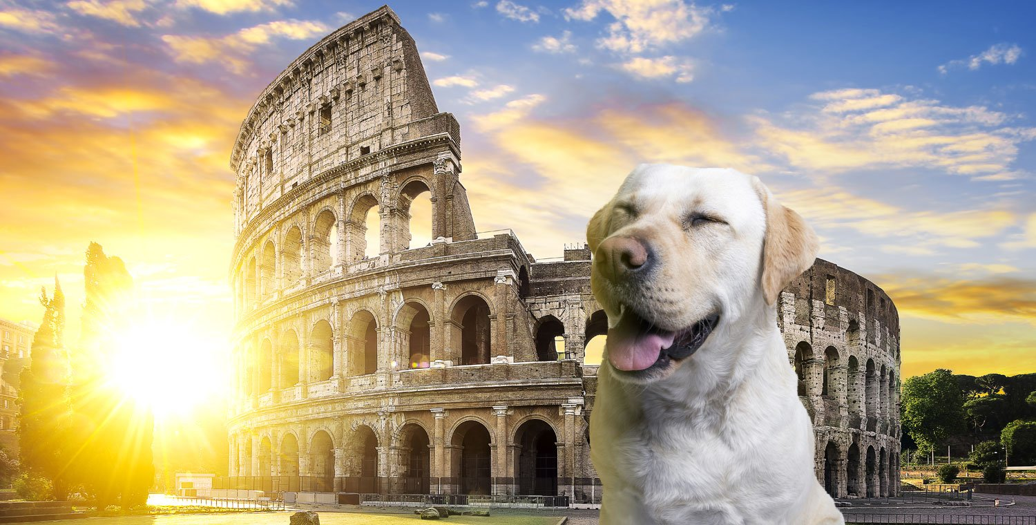 visit-colosseum-rom-with-a-dog_v2