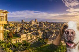 Visita guidata per le creuze a Genova con un cane