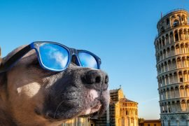 torre-di-pisa-con-un-cane-salta-coda