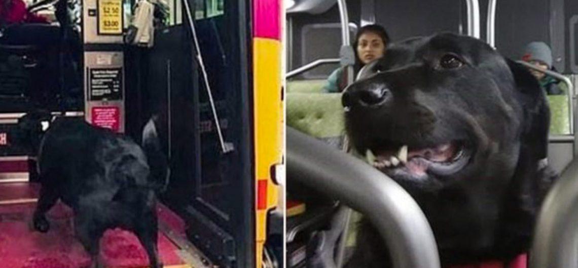 Eclipse-il-cane-che-prende-autobus-da-sola-per-andare-a-giocare