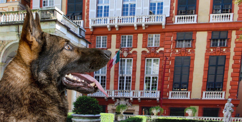 Palazzi-dei-Rolli-in-Genua-mit-einem-Hund