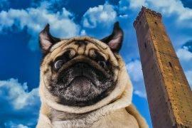 Torre-degli-Asinelli-a-Bologna-con-un-cane-e-degustazione