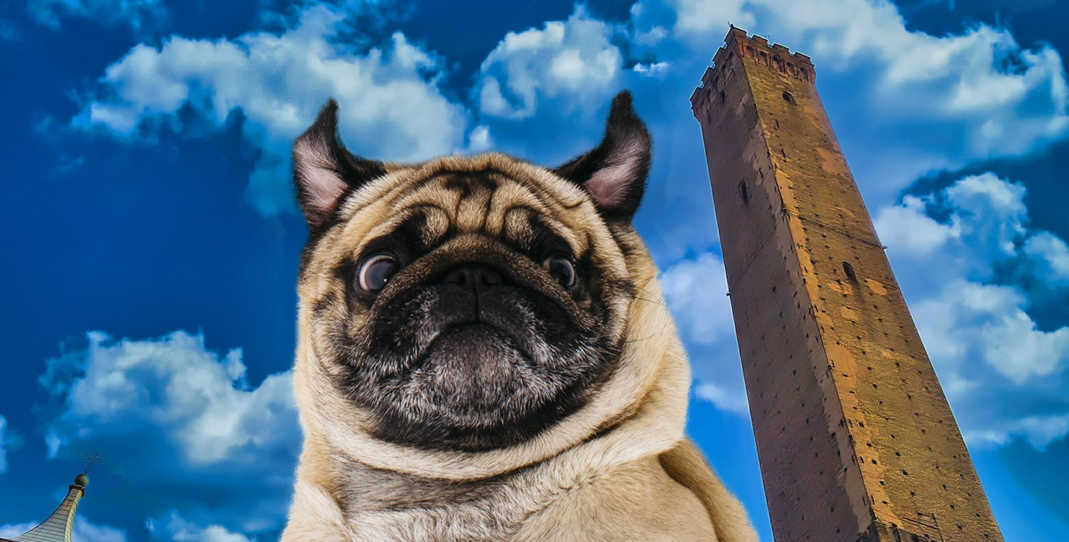 Torre-degli-Asinelli-in-Bologna-with-a-dog-and-tasting